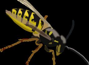 Wat te doen bij een wespensteek?